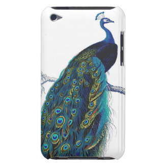 Blue Peacock with beautiful tail feathers Barely There iPod Cases