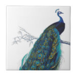 """Blue Peacock with beautiful tail feathers Ceramic Tile<br><div class=""""desc"""">vintage, peacock, peahen, &quot;pea hen&quot;, blue, turquoise, teal, feathers, bird, birds, animal, animals, wildlife, natural, nature, classic, classy, elegant, sophisticated, art, artistic, drawing, vain, proud, beautiful, pretty, colorful, feather, &quot;dark blue&quot;, wild, peafowl, fowl, green, yellow, girly, feminine, colorful, contemporary, modern, trendy, fashionable, fashion, magnificent, majestic, feminine, white, &quot;royal blue&quot;, royal,...</div>"""