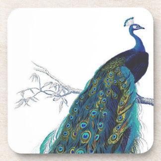 Blue Peacock with beautiful tail feathers Coasters