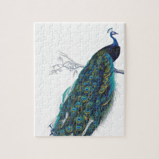 Blue Peacock with beautiful tail feathers Jigsaw Puzzle