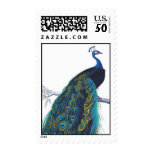 Blue Peacock With Beautiful Tail Feathers Postage at Zazzle