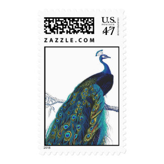 Blue Peacock with beautiful tail feathers Stamp