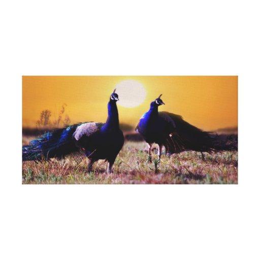Blue peacocks canvas print