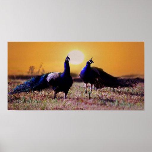 Blue peacocks poster