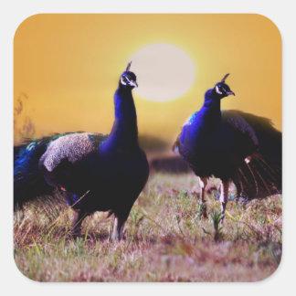Blue peacocks square sticker