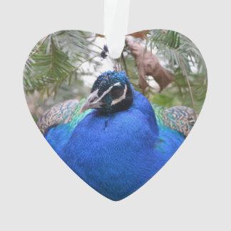 Blue Peafowl Bird