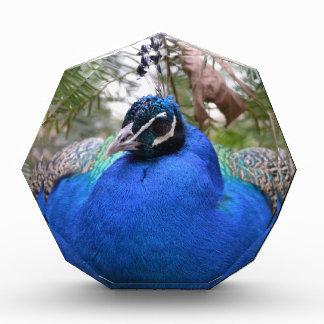 Blue Peafowl Bird Awards
