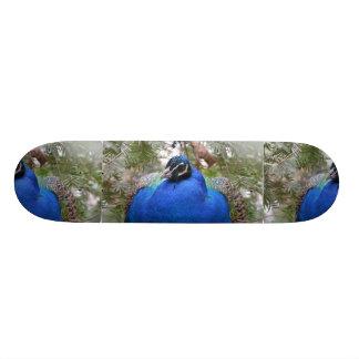 Blue Peafowl Bird Skateboards