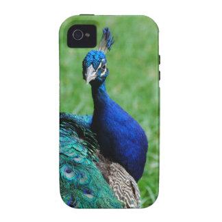 Blue Peafowl iPhone 4 Case