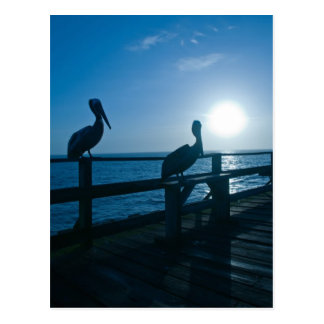 Blue Pelicans Post Card
