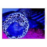 Blue Persian In A Tight Spot Greeting Card