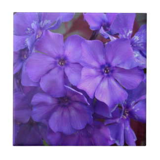 Blue Phlox Flowers Tile