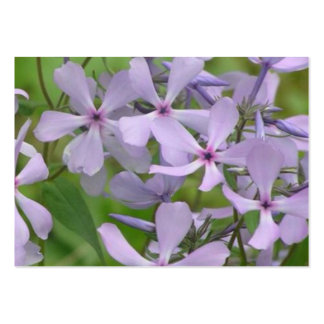 blue phlox with nice purplish petals large business cards (Pack of 100)