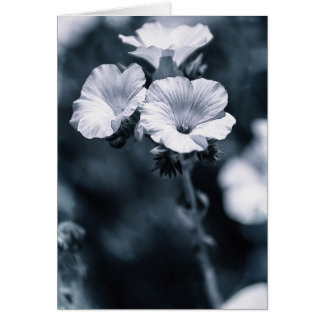 Blue Photograph Of White Flowers Card