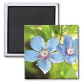 Blue Pimpernel (Anagallis monelli) Flowers 2 Inch Square Magnet