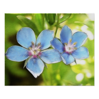 Blue Pimpernel (Anagallis monelli) Flowers Poster