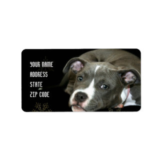 Blue pitbull puppy address labels