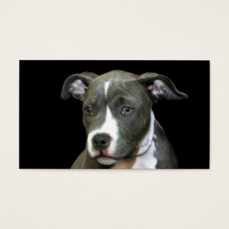 Blue Pitbull Puppy business cards