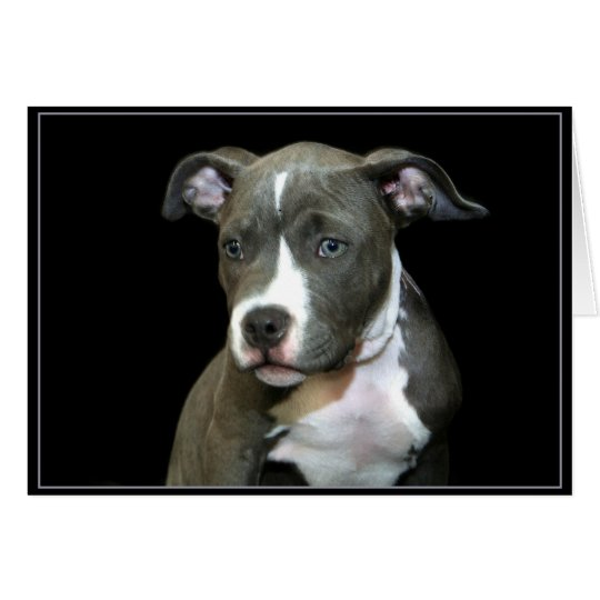 Blue Pitbull Puppy Greeting Card