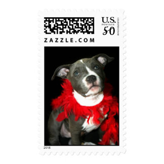 Blue pitbull puppy postage