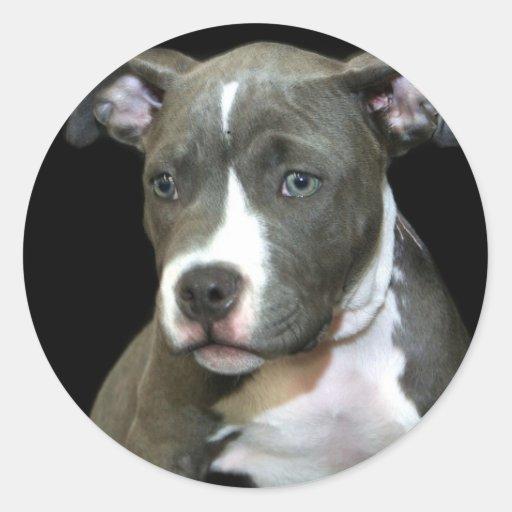 Blue Pitbull Puppy Round Stickers