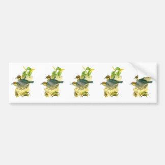 Blue Pitta Bumper Sticker