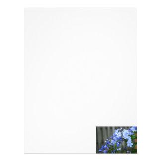 blue plumbago flowers close up letterhead