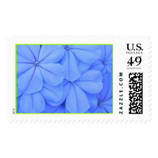 Blue Plumbago Stamp