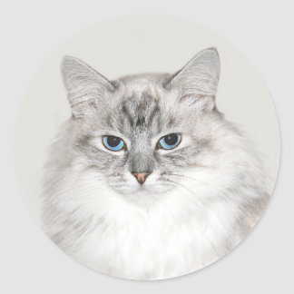 Blue point Himalayan cat Classic Round Sticker