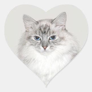 Blue point Himalayan cat Heart Sticker