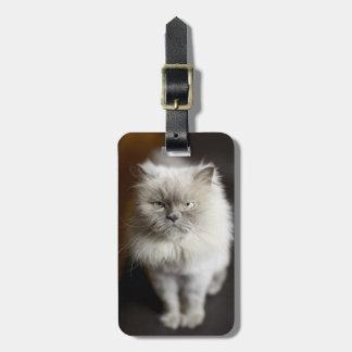 Blue Point Himalayan Cat looking irritated Bag Tag