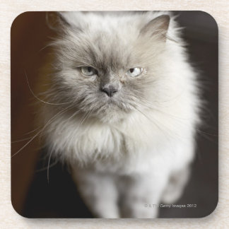 Blue Point Himalayan Cat looking irritated Beverage Coaster