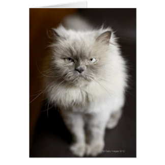 Blue Point Himalayan Cat looking irritated Greeting Card