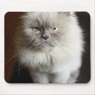 Blue Point Himalayan Cat looking irritated Mouse Pad