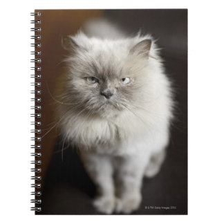 Blue Point Himalayan Cat looking irritated Spiral Note Books