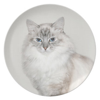 Blue point Himalayan cat Melamine Plate