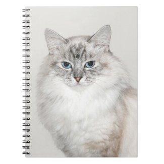 Blue point Himalayan cat notebook