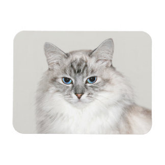 Blue point Himalayan cat Magnets