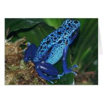 Blue Poison Arrow Frog Portrait