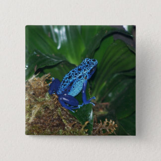 Blue Poison Arrow Frog Portrait Pinback Button