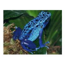 Blue Poison Arrow Frog Portrait Postcard
