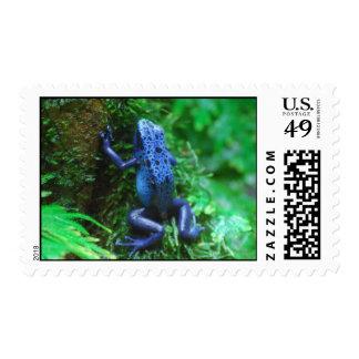 Blue Poison Arrow Frog Postage