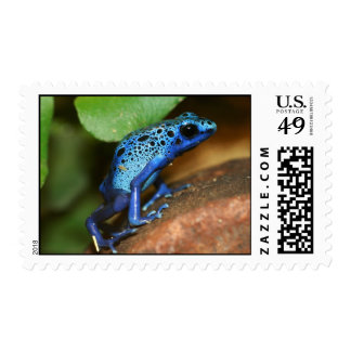 blue poison arrow frog postage stamps