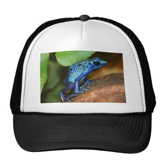 blue poison arrow frog trucker hat