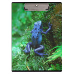 Blue Poison Dart Frog Clipboard