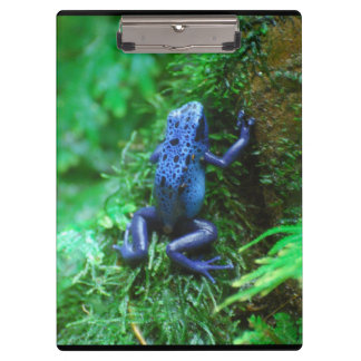 Blue Poison Dart Frog Clipboard