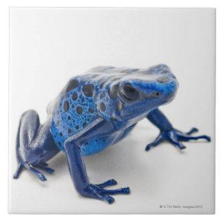 Blue Poison Dart Frog (Dendrobates Tinctorius) Ceramic Tile