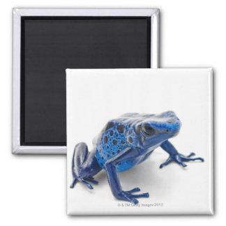 Blue Poison Dart Frog (Dendrobates Tinctorius) Magnet