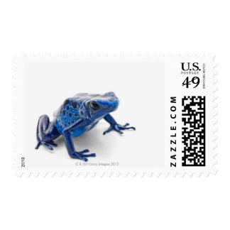Blue Poison Dart Frog (Dendrobates Tinctorius) Postage