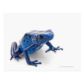Blue Poison Dart Frog (Dendrobates Tinctorius) Postcard